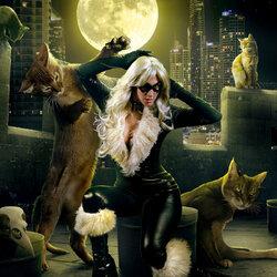 Пазл онлайн: Любимый котенок
