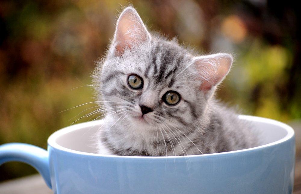 руки сайты котята в кружке картинки краса увядает, цветут