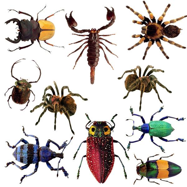 Картинки жучки и паучки