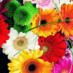 Пазл онлайн: Герберы и хризантемы