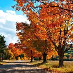 Пазл онлайн: Осенняя пора