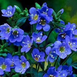 Пазл онлайн: Маленький синий цветочек