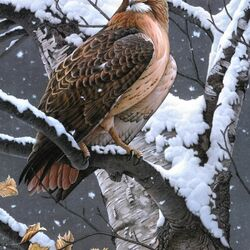 Пазл онлайн: Хищная птица