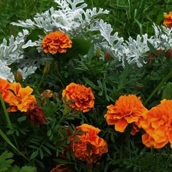 Пазл онлайн: Натура в саду