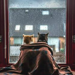 Пазл онлайн: Сегодня дождь