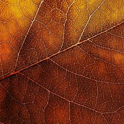 Пазл онлайн: Осенний лист