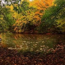 Пазл онлайн: Листопад у пруда
