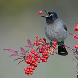 Пазл онлайн: Птица на ветке