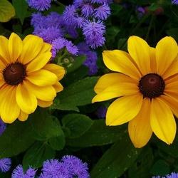 Пазл онлайн: Осенние цветы
