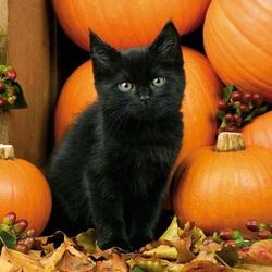 Пазл онлайн: Черный котенок