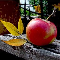 Пазл онлайн: Наливное яблочко