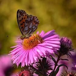 Пазл онлайн: Флора и фауна