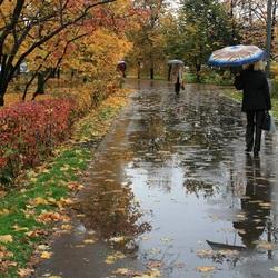 Пазл онлайн: Дождливо