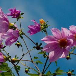 Пазл онлайн: Цветы на ветру