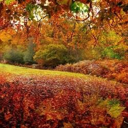 Пазл онлайн: Цвет осени