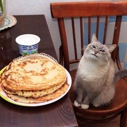 Пазл онлайн: Котик и блинчики