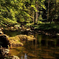 Пазл онлайн: Лесная речка