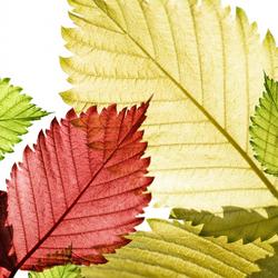 Пазл онлайн: Осеннее кружево