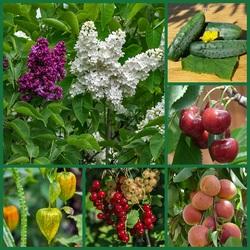 Пазл онлайн: Во саду ли, в огороде