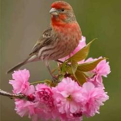 Пазл онлайн: Весенний  мотивчик