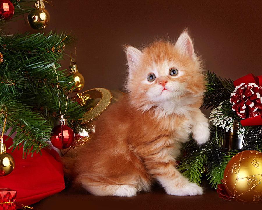 рисунок картинки с новогодними котятами михайлов