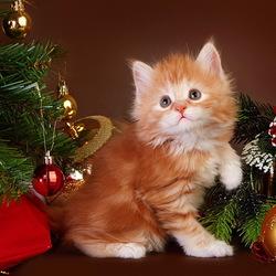Пазл онлайн: Новогодний котёнок