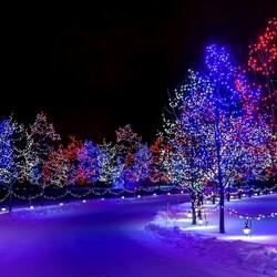 Пазл онлайн: В ночь под Новый год