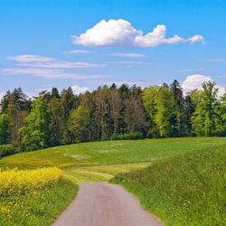 Пазл онлайн: Яркая зелень лета