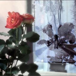 Пазл онлайн: Зима и розы