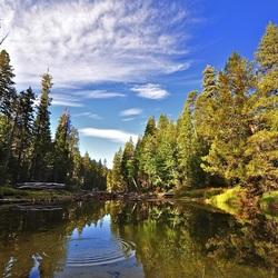Пазл онлайн: Водоем в лесу