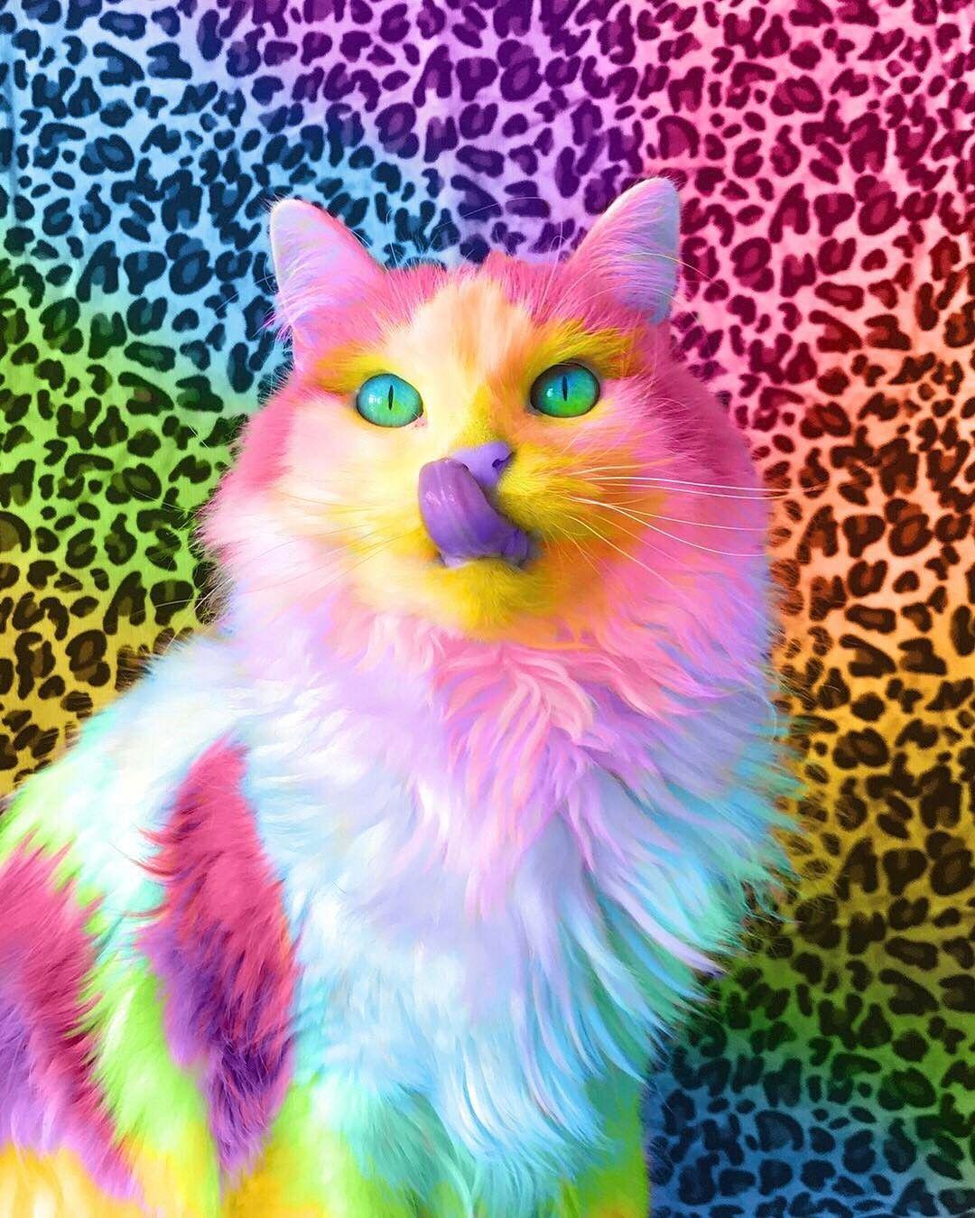 картинка разноцветные коты вечеринки пестрят самыми