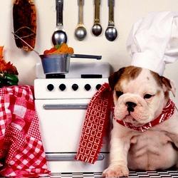 Пазл онлайн: Шеф-повар