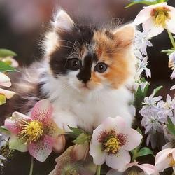 Пазл онлайн: Пушистый цветочек