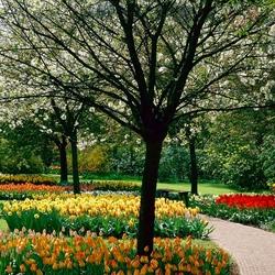 Пазл онлайн: Аллея цветов в Кёкенхофе
