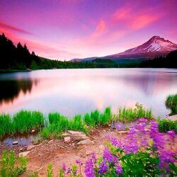 Пазл онлайн: Горное озеро с цветами
