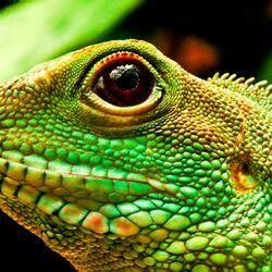 Пазл онлайн: Зеленая ящерица