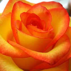 Пазл онлайн: Мир цветов