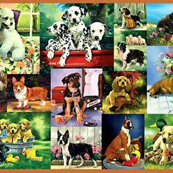 Пазл онлайн: Такие разные собачки