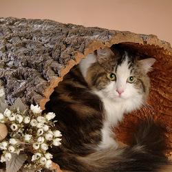 Пазл онлайн: Кошкин дом