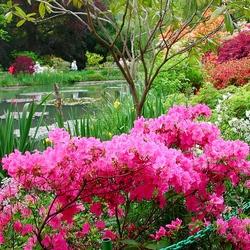 Пазл онлайн: Цветущий парк