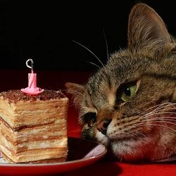Пазл онлайн: День Рождения - грустный праздник