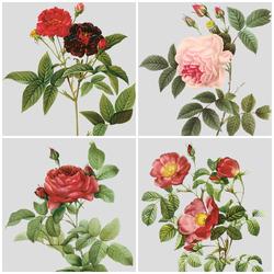 Пазл онлайн: Розы Марии-Антуанетты