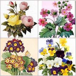 Пазл онлайн: Цветочное ассорти