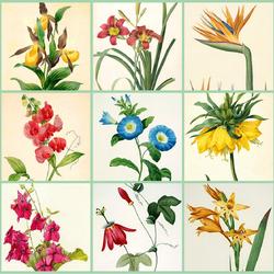 Пазл онлайн: Ботанические акварели