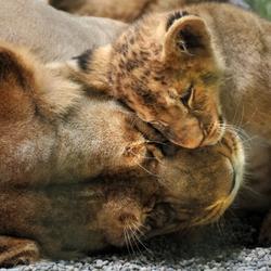 Пазл онлайн: Мама, я тебя люблю