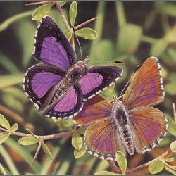 Пазл онлайн: Цветные мотыльки