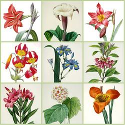 Пазл онлайн: Цветы летнего сада