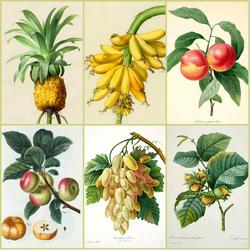 Пазл онлайн: Ботанический коллаж