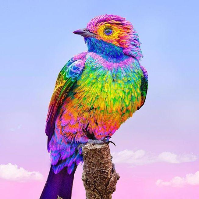 картинки радужных птиц бьякугана