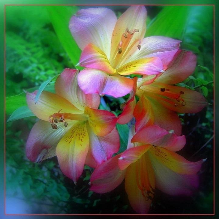 Поздравления, именные открытки лилии
